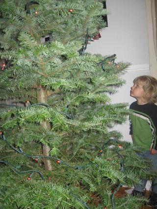 Christmas Tree.09 (5)
